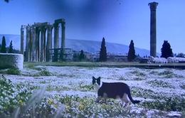 Đất nước Hy Lạp đẹp như trong thần thoại