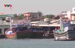 Ngư dân Miền Trung được mùa đánh bắt thủy sản