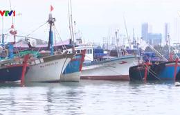 Khó khăn của ngư dân khi giá cá ngừ giảm mạnh