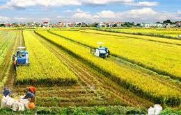 Hà Nội chuyển đổi hơn 5.300 ha đất trồng lúa sang mô hình có giá trị cao
