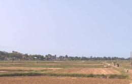 Nhiều diện tích đất sản xuất bỏ trống vì thiếu nước