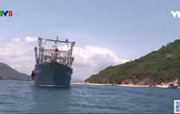 Bình Định: Hơn 20 tàu cá đóng theo NĐ67 được mua bảo hiểm tàu cá