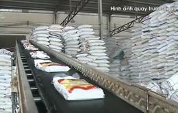 Lập đoàn kiểm tra liên ngành nắm tình hình gạo tại các cảng