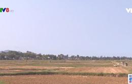 Bình Định: Bỏ trống gần 5.000ha vụ hè thu do thiếu nước