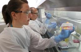Australia thử nghiệm giai đoạn 1 vaccine phòng COVID-19