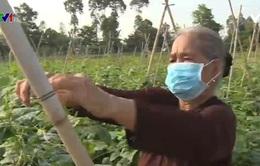 Thuê đất trồng màu làm từ thiện