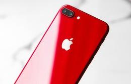 Đừng vội mua iPhone SE mới, bởi iPhone SE Plus sắp ra mắt