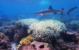 """Thử nghiệm """"tạo mây biển"""" nhân tạo để cứu các rạn san hô"""