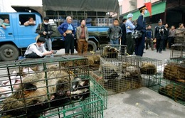 Mỹ đề nghị Trung Quốc xóa sổ chợ động vật hoang dã