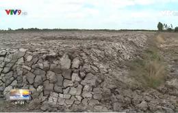 Cà Mau: Người dân bức xúc vì cùng loại đất nhưng áp nhiều mức giá thu hồi