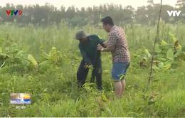 Đặt trúm lươn vùng U Minh Hạ