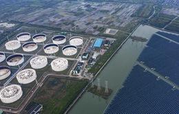 Các công ty dầu khí Trung Quốc dự báo thua lỗ nặng nề trong quý I