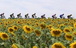 Tổng quan Giải xe đạp VTV Cúp Tôn Hoa Sen 2020: 9 chặng đua với tổng hành trình 858 Km