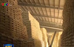 Lượng gạo dự trữ quốc gia chỉ chiếm 3% lượng gạo có thể xuất khẩu