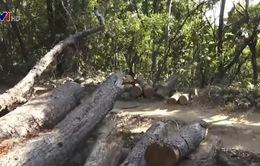Phá rừng quy mô lớn tại Kon Tum