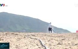 Khánh Hòa: Nguy cơ ngưng sản xuất 10 ngàn ha lúa Hè Thu do nắng hạn