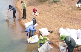 Thả 600kg cá giống nhằm cân bằng sinh thái hồ Trị An
