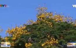Ngắm hoa trước hiên nhà - bình yên mùa dịch bệnh