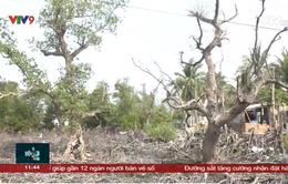 Khánh Hoà chỉ đạo xử lý nghiêm vụ phá rừng ngập mặn Tuần Lễ