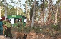 Khánh Hòa nỗ lực giảm điểm nóng về xâm hại rừng