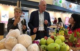 Mỹ, Trung Quốc vẫn nhập khẩu nhiều trái cây Việt Nam