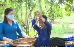 Cần Thơ: Trải nghiệm chụp ếch, bắt cá trên cạn