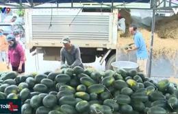 Khánh Hòa: Bài toán thị trường khi chuyển đổi sang cây trồng cạn