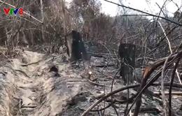 Quảng Nam: Hiệu quả của lực lượng bảo vệ rừng chuyên trách