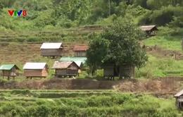 Quảng Ngãi: Xây dựng trái phép chờ đền bù dự án tại Ba Tơ