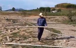 Nam Trung Bộ: Xả nước mùa mưa gây lụt lội, hồ chứa mùa khô cạn trơ đáy