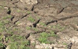Ninh Thuận cạn kiệt nước các hồ chứa