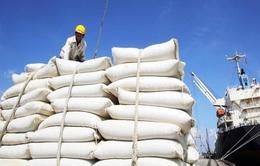 Giá gạo Việt Nam xuất khẩu cao chót vót