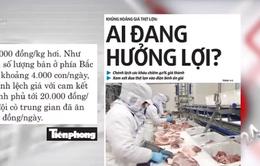 Khủng hoảng giá thịt lợn: Ai đang được hưởng lợi?