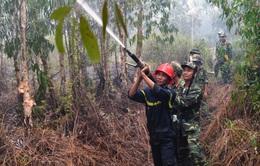 """Hàng chục ha rừng tràm ở Kiên Giang bị """"bà hỏa"""" thiêu rụi"""