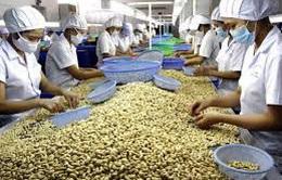 Gần 1 tỷ USD thu về từ xuất khẩu hạt điều trong 4 tháng đầu năm 2020