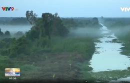 Kiên Giang: Rừng nước đỏ - U Minh Thượng