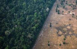 Rừng Amazon có thể là ổ dịch lây lan virus tiếp theo