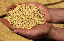 Giá nông sản thế giới có xu hướng giảm