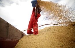 Trung Quốc âm thầm tích trữ lương thực