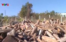 Hạn chế sử dụng củi gỗ để sấy thuốc lá