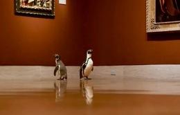 3 chú chim cánh cụt được mời tới thăm viện bảo tàng