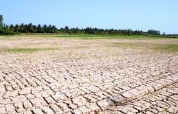 Thủ tướng yêu cầu tập trung ứng phó nắng hạn, không để người dân thiếu nước