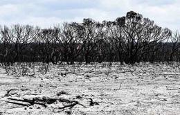 Biến đổi khí hậu có nên được ghi là nguyên nhân tử vong?