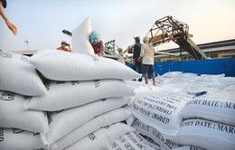 Từ đầu năm 2020, Việt Nam xuất khẩu gạo được gần 1 tỷ USD