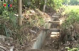 Quảng Nam: Sản xuất nông nghiệp điêu đứng vì nắng hạn