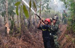 Cháy rừng ở huyện Hòn Đất đã được khống chế