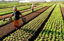 Đề xuất tiếp tục miễn thuế sử dụng đất nông nghiệp đến hết năm 2025