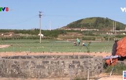 Xử lý tình trạng khoan giếng trái phép ở Lý Sơn