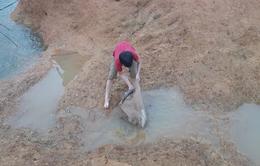 Tranh thủ... vỡ đập chứa nước ở Phú Thọ, người dân đi bắt cá