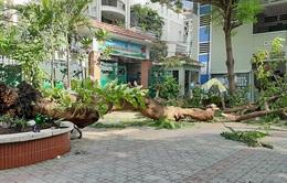 TP.HCM rà soát cây xanh, đảm bảo an toàn trường học